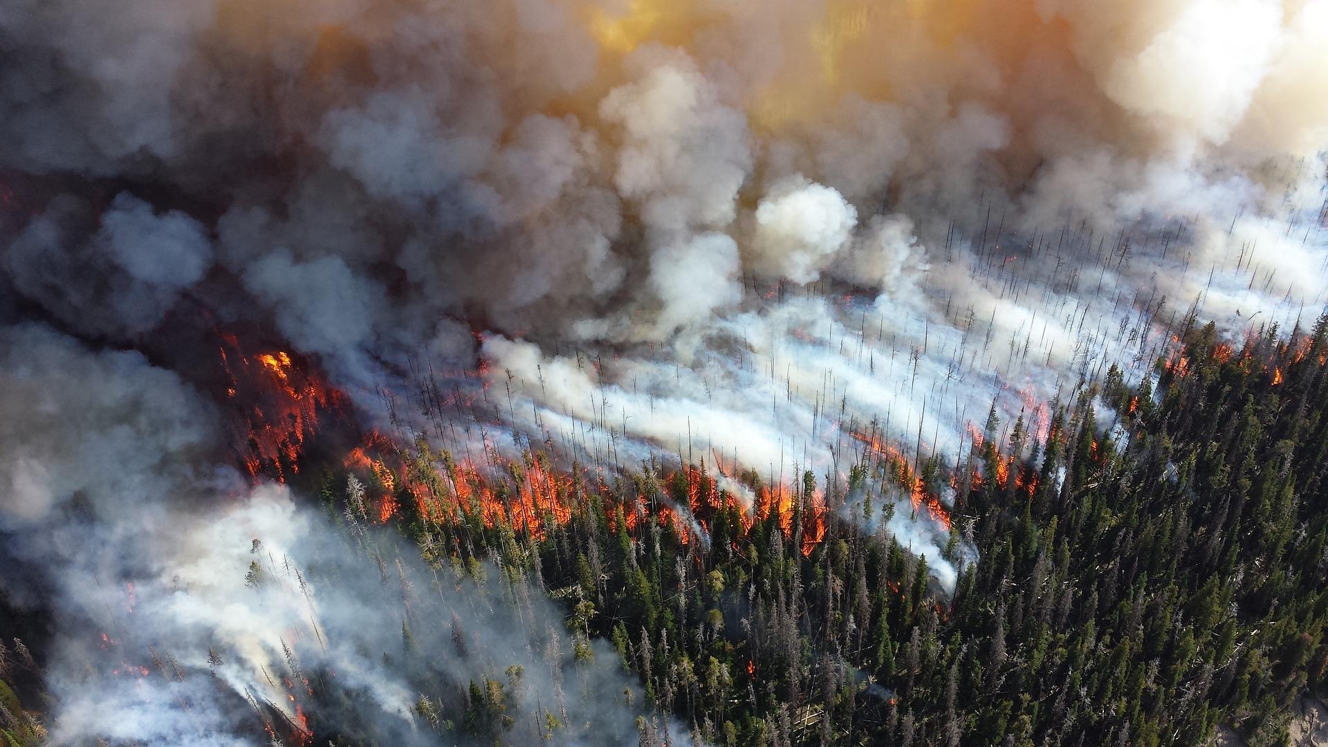 feux de forêt enjeux climatique